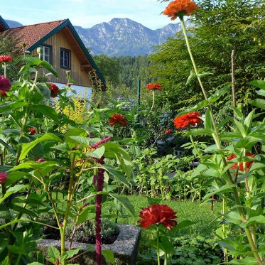 Gemma Garten schaun: Gartenparadies vor Hohem Kalmberg bei Bad Goisern im Gartenland Salzkammergut