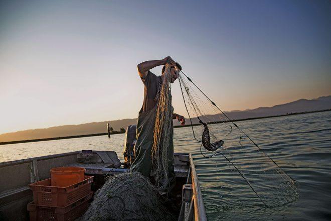 Fangfrisch: Fischer Franz Blum bei der Arbeit auf dem Bodensee. Genussziel in Vorarlberg
