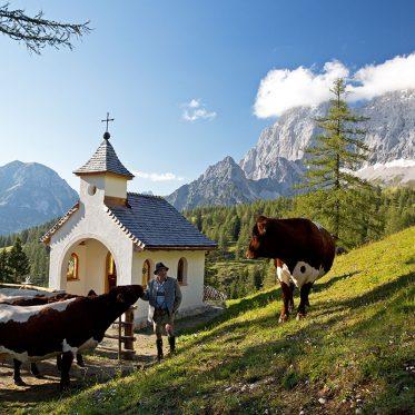 Almen in Österreich. Bei Fritz Schrempf auf der Dachsteiner Brandalm möchte man Kuh sein