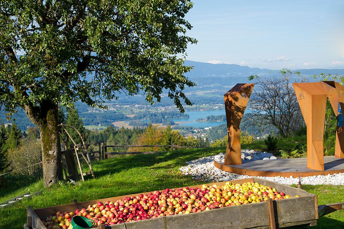 Apfelernte hoch über dem Faaker See. Grenzenlos wandern am Alpe-Adria-Trail