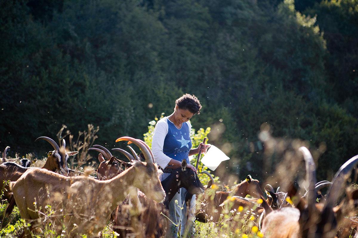 Gemeinsam sind wir Stark. In ihrer Heimat politisch verfolgt, fanden Agitu Ideo Gudeta – und die Mochena-Ziege – auf den würzigen Wiesen der Val die Gresta neues Leben. Agitu Ideo Gudetu. Bio-Ziegenkäse von der Mochena-Ziege