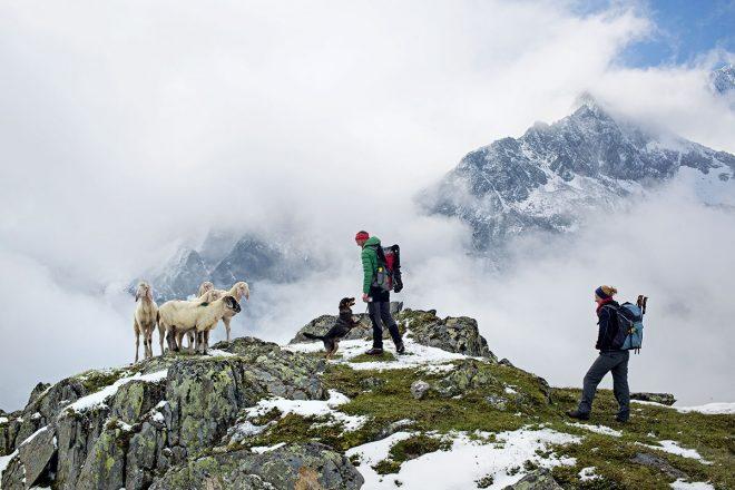 Hund & Hütte – Wandern mit Wau-Effekt. Mit dem Hund erlebst du Sachen am Berg – da kommst du vorher gar nicht drauf
