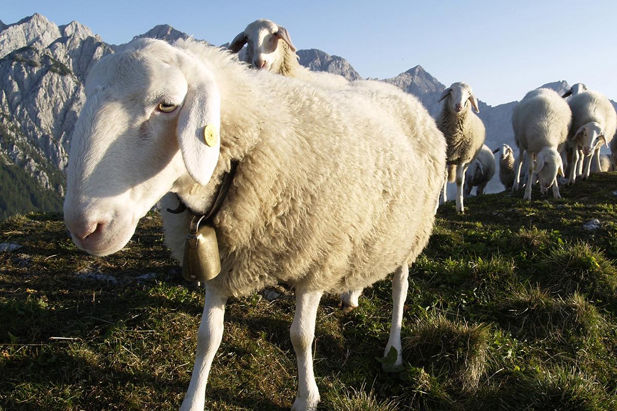 Bergsteigerdörfer ohne Grenzen. Jezersko: das zukünftige Bergsteigerdorf vertritt Slowenien