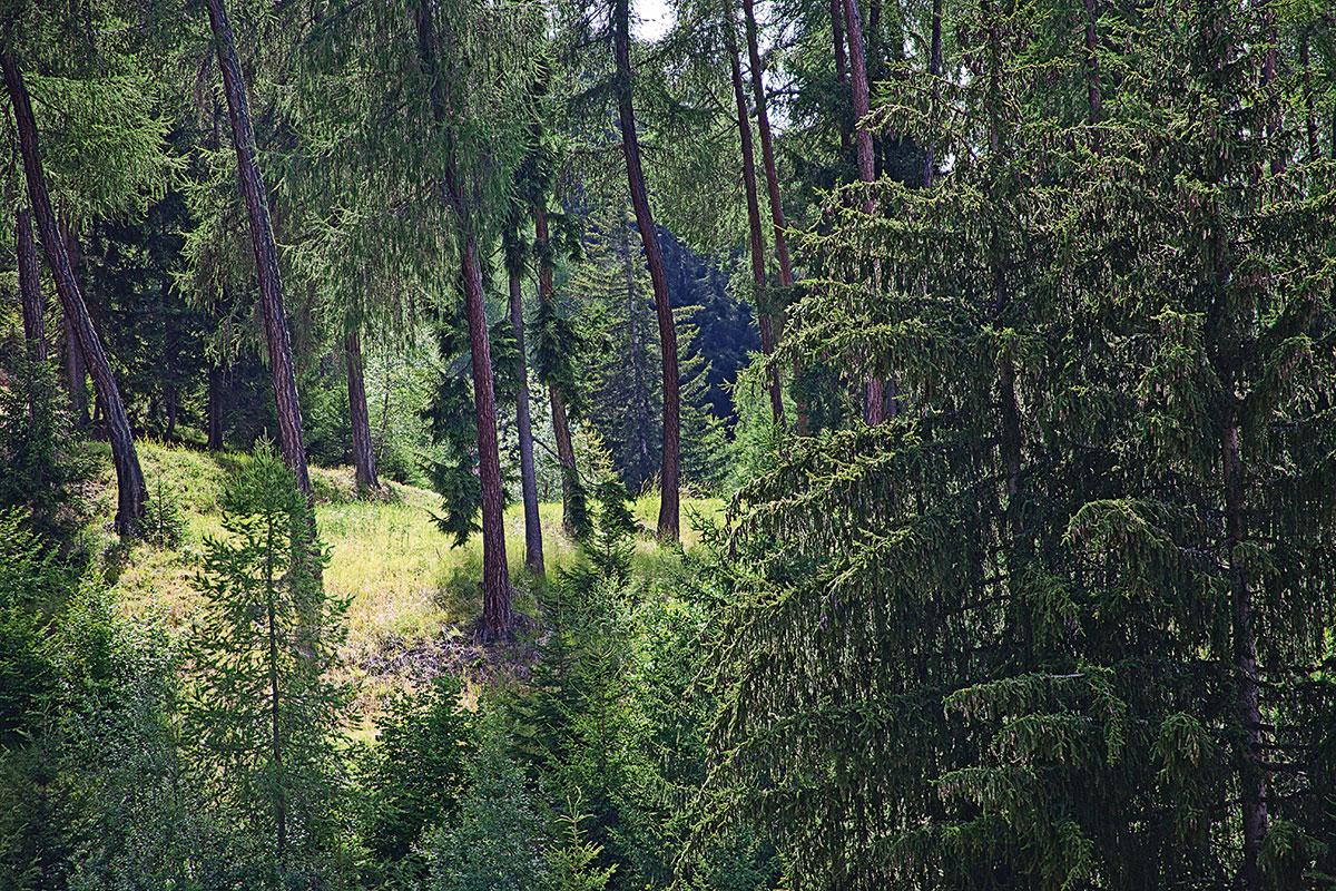 Yoga im Wallis – Alle guten Geister. Aus aller Herren Länder kommen Gäste in die hohen Wälder des Wallis