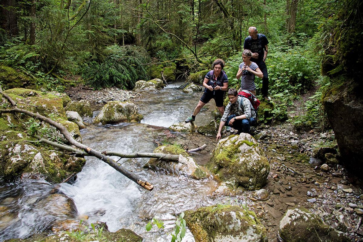 Werfenweng im Salzburger Land –Wandern mit Weitblick. Der Spazierhimmel wird gerade auf zwölf Kilometer ausgebaut. Neu dazugekommen ist der Weg entlang des Baches durch ein Waldstück