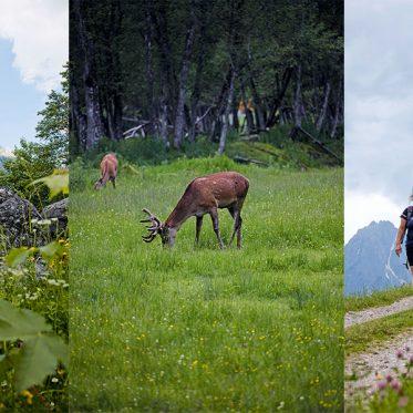 Werfenweng im Salzburger Land –Wandern mit Weitblick. Sehenswert ist bereits das Bergpanorama in Werfenweng – ganz oben die Eiskögel in Form von Katzenohren. Sieht weich aus, jedenfalls durchs Fernglas – im Frühsommer trugen die Hirsche noch Flaum auf dem Geweih