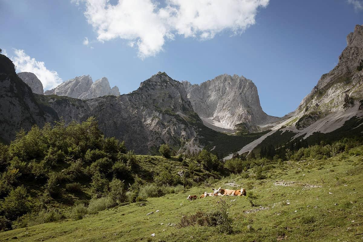 Fünf Tiroler Aktive, die ohne Bewegung in der Natur nicht leben können. Die steilen Felswände des Wilden Kaisers bieten zahlreiche spannende Kletterrouten.