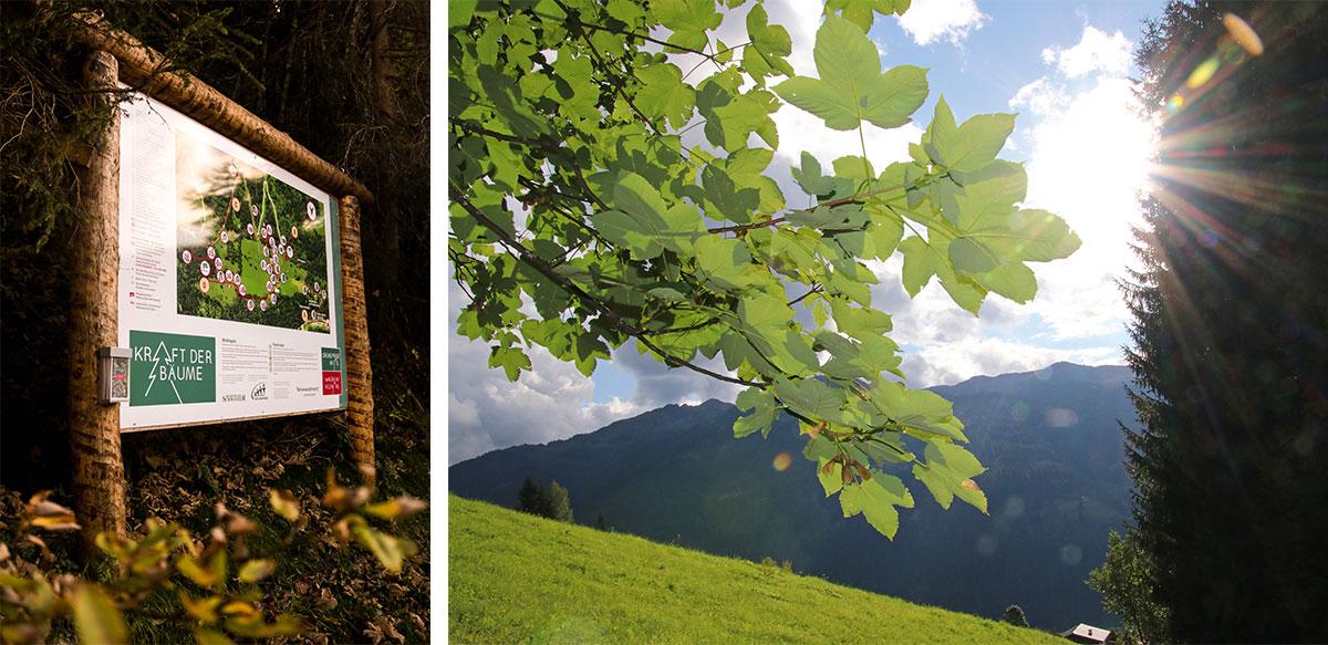 Lehrpfad Kraft der Bäume in Wagrain-Kleinarl