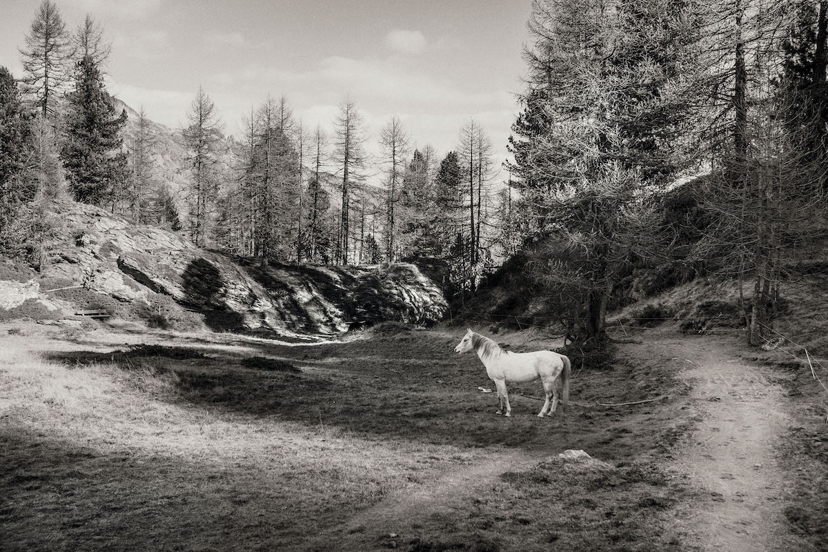 Die Fotografie von Sammy Hart trägt die Poesie des Augenblicks in sich.