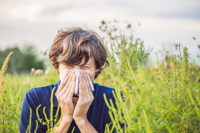 Wenn es grünt und blüht, beginnt für Pollenallergiker die Zeit unangenehmer Symptome.