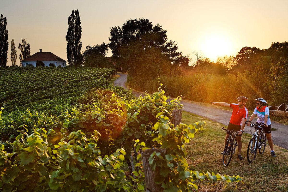 Radfahren in Wein- und Apfelgärten. Foto: © TV Bad Radkersburg - Bergmann