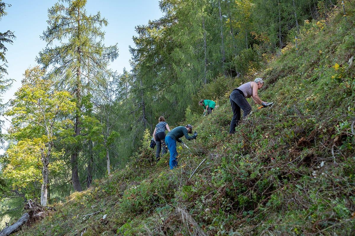 Sie zeigten viel Einsatz – auch im steilen Gelände leistete die Gruppe wirklich tolle Arbeit und unterstützte die Almbauern tatkräftig beim Freihalten der Almflächen. (© Biosphärenregion Berchtesgadener Land)